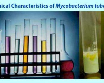 Biochemical Characteristics of Mycobacterium tuberculosis