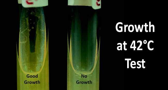 Growth at 42°C Test- Principle, Procedure and Result Interpretation