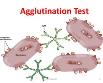 Agglutination- Introduction and Applications