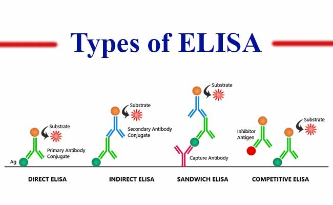 Enzyme-linked immunosorbent assay (ELISA) and its types