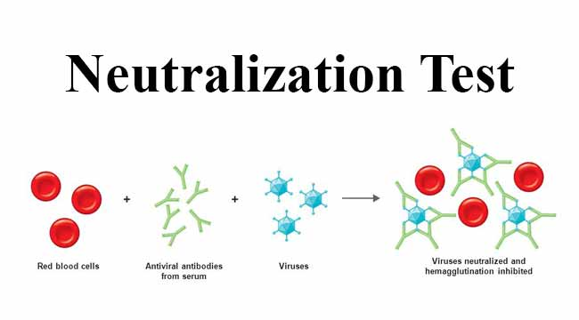 Neutralization Test- Introduction and Types