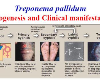Pathogenesis and Clinical manifestations of Treponema pallidum