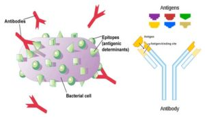 Introduction to Antigen