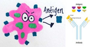 Types of antigen on the basis of source and immune response