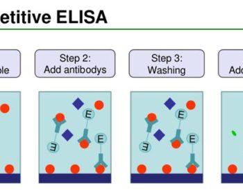 Competitive ELISA Protocol and Animation