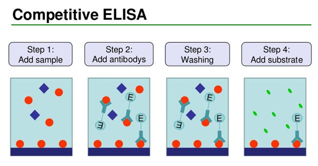 Competitive ELISA Protocol and Animation