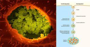 Pathogenesis and Clinical Manifestations of Coxiella burnetii