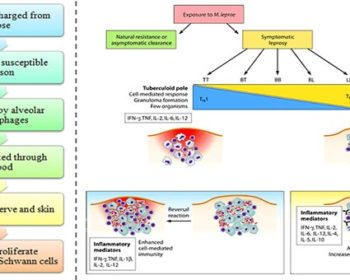 Pathogenesis and Clinical Manifestations of Mycobacterium leprae