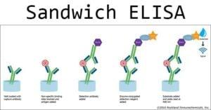 Sandwich ELISA- Steps and Advantages
