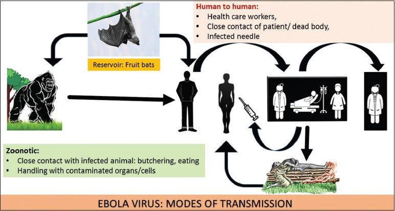 Transmission of Ebola Virus