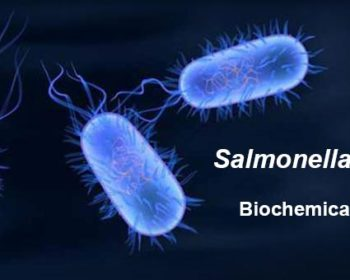 Biochemical Test ofSalmonella Typhi
