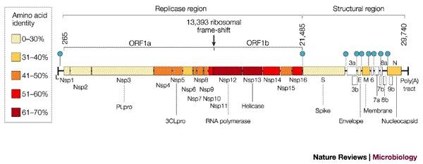 GenomeofCoronavirus