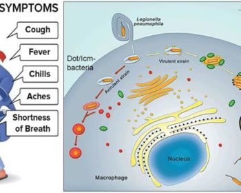 Virulence factors, Pathogenesis and Clinical manifestations of Legionella pneumophila