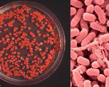 Biochemical Test of Serratia marcescens