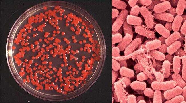 Biochemical Test of Serratia marcescens