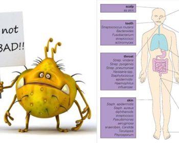 Normal Human Microbiota