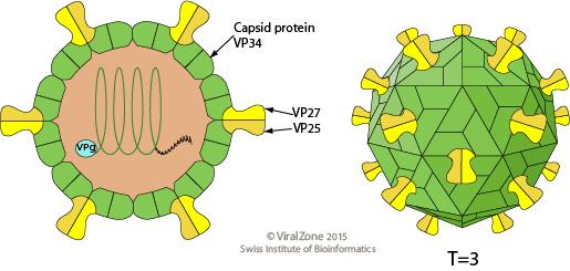 Structure ofHuman Astrovirus