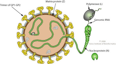 Structure of Lassa Virus