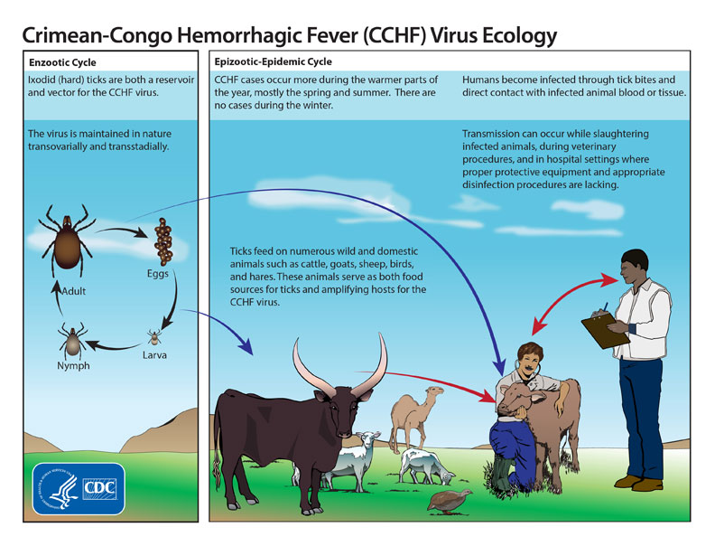 Transmission of Crimean-Congo Hemorrhagic Fever Virus