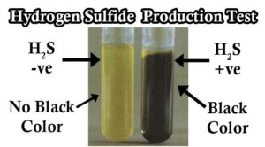 Result Interpretation of Hydrogen Sulfide (H2S) Production Test