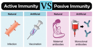 Differences between Active Immunity and Passive Immunity