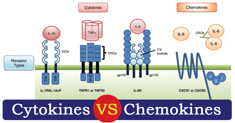 Differences between Cytokines and Chemokines