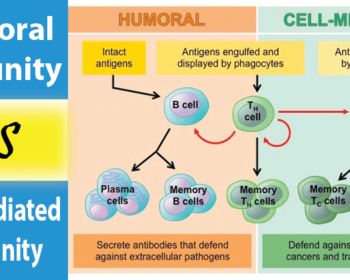 Differences between Humoral Immunity and Cell mediated Immunity