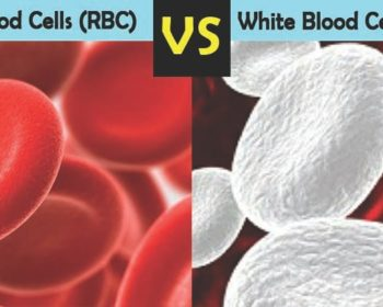 Differences between RBCs and WBCs