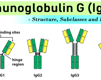 Immunoglobulin G (IgG)- Structure, Subclasses and Functions