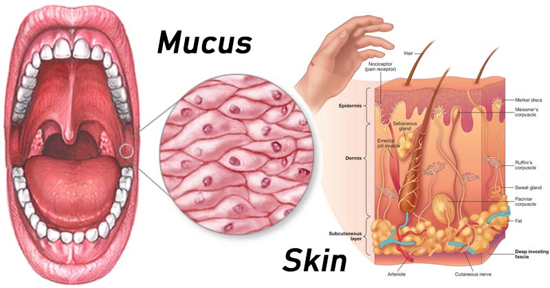 Anatomical Barriers of Immune System- Skin and Mucus