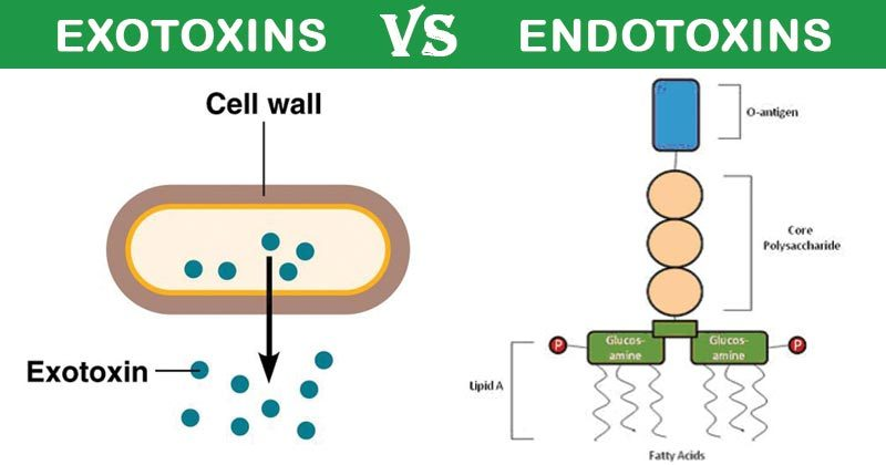 Differences between Exotoxins and Endotoxins