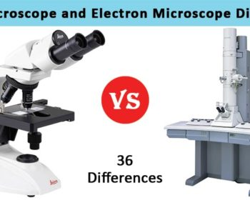 Differences between Light and Electron Microscope