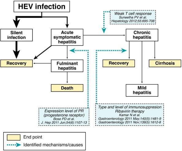 Pathogenesis ofHepatitis E Virus
