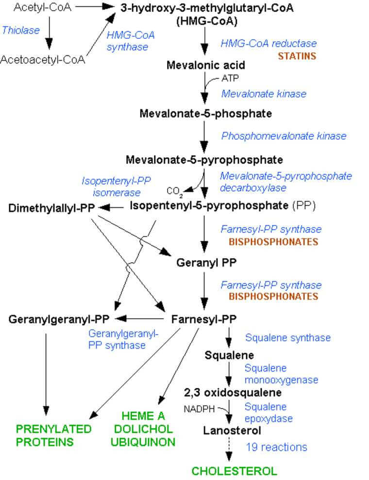 Cholesterol Synthesis Steps