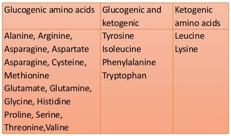 Classification of amino acids on the basis of metabolic fate