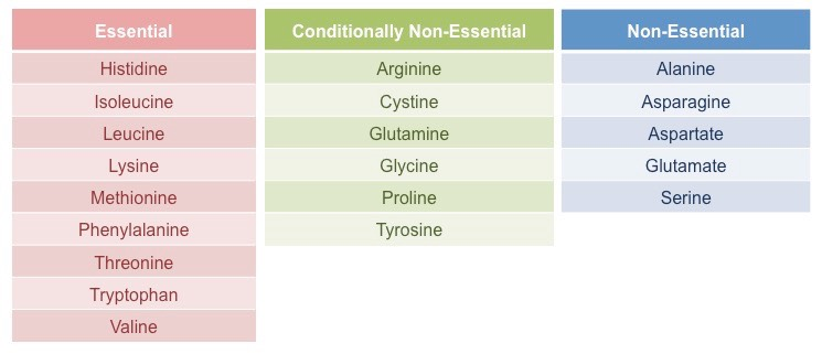 Classification of amino acids on the basis of nutrition