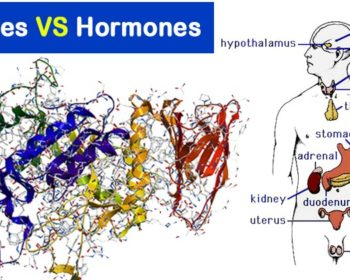 Differences between Enzymes and Hormones