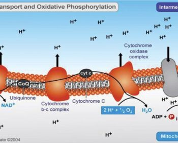 Oxidative Phosphorylation and ETC