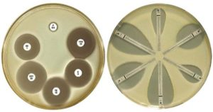 Result on Mueller Hinton Agar (MHA)