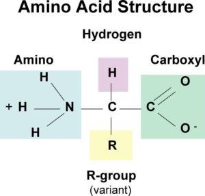 Structure of Amino acids