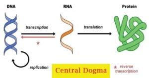 Central Dogma-Replication,Transcription, Translation