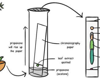 Chromatography- Principle, Types and Applications