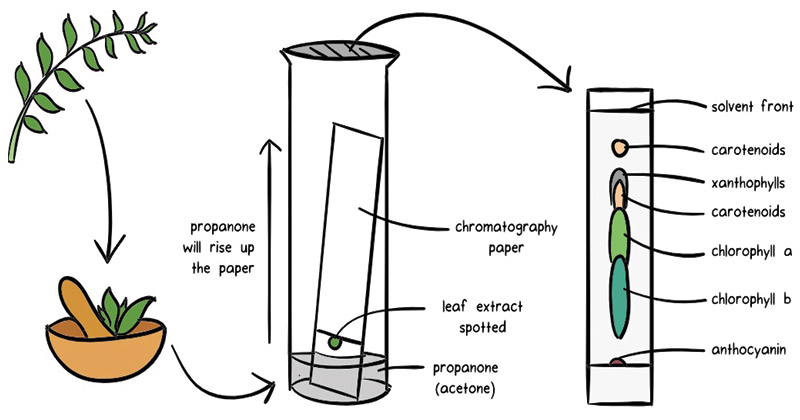 Chromatography- definition, principle, types, applications