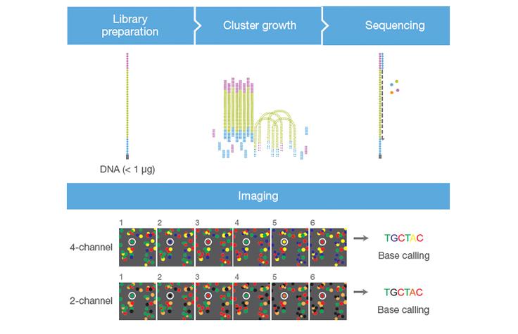 Illumina (Solexa) sequencing