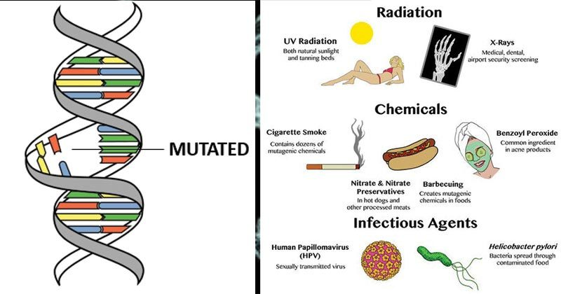 Mutation- Causes, Mechanisms, Agents and Significance