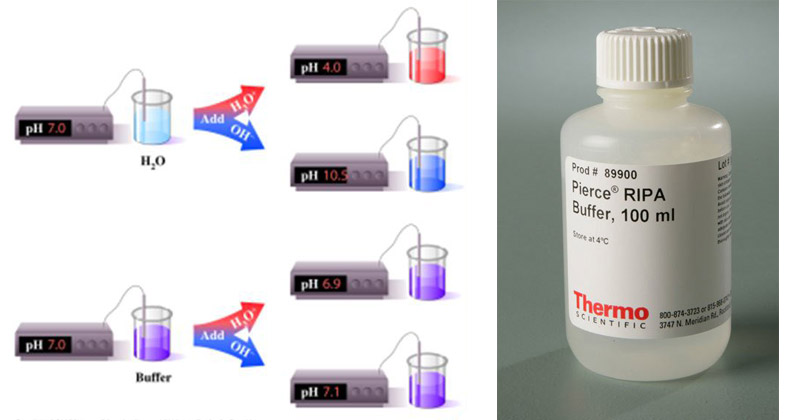 Buffer and Extraction Buffer