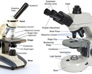 Compound Microscope
