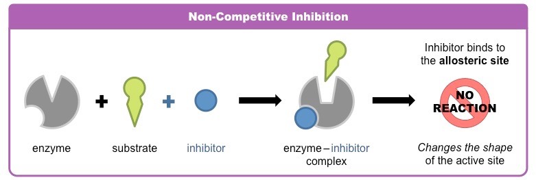 Non- competitive Inhibitors
