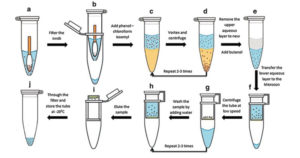 Protocol Phenol-chloroform extraction of prokaryotic DNA