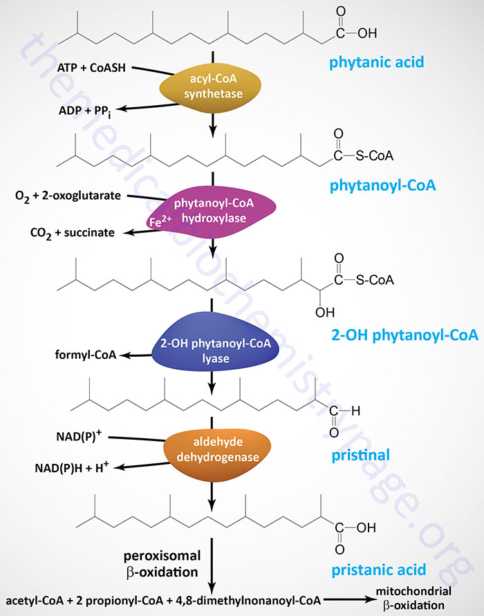 Reactions Involved phytanic acid
